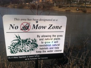 No mow zone